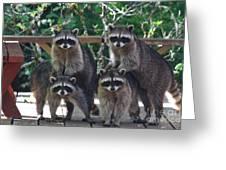 Cheerleading Raccoons Greeting Card by Kym Backland