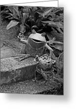 Cheers In Black And White Greeting Card by Suzanne Gaff