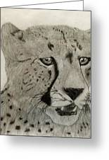 Cheetah II Greeting Card by Noah Burdett