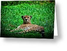 Cheetah Greeting Card by Karol  Livote