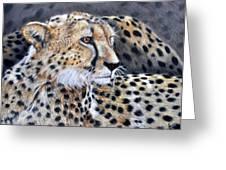 Cheetah Greeting Card by Louise Charles-Saarikoski