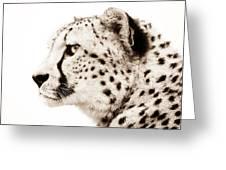 Cheetah Greeting Card by Jacky Gerritsen