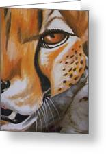Cheetah Up Close Greeting Card by Scott Dokey
