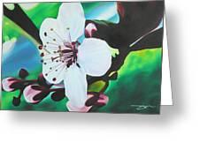 Cherry Blosom Greeting Card by Joshua Morton