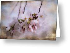 Cherry Blossom Dreams Greeting Card by Terry Rowe