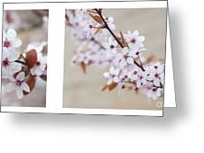 cherry blossom II Greeting Card by Hannes Cmarits