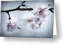 Cherry Blossom Sweetness Greeting Card by Kathy Clark