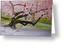 Cherry Blossom Tree Greeting Card by Linda Ginn