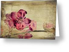 Cherry Blossom with Textures Greeting Card by John Edwards