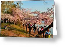 Cherry Blossoms 2013 - 007 Greeting Card by Metro DC Photography