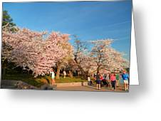 Cherry Blossoms 2013 - 015 Greeting Card by Metro DC Photography