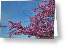 Cherry Blossoms 2013 - 037 Greeting Card by Metro DC Photography