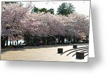 Cherry Blossoms 2013 - 059 Greeting Card by Metro DC Photography