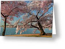 Cherry Blossoms 2013 - 063 Greeting Card by Metro DC Photography