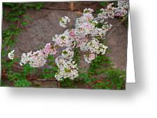 Cherry Blossoms 2013 - 067 Greeting Card by Metro DC Photography