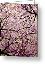 Cherry Blossoms Greeting Card by Bobby Zeik