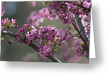 Cherry Blossoms Greeting Card by Dale Kincaid