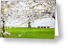 Cherry Blossoms On The Shore Of Fort Mchenry Greeting Card by Susan  Schmitz