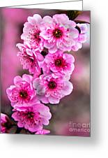 Cherry Blossoms Greeting Card by Robert Bales
