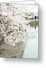 Cherry Blossoms - Washington Dc - 0113104 Greeting Card by DC Photographer