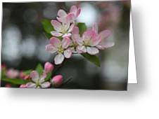 Cherry Blossoms - Washington Dc - 0113110 Greeting Card by DC Photographer