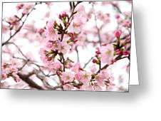 Cherry Blossoms - Washington Dc - 0113124 Greeting Card by DC Photographer