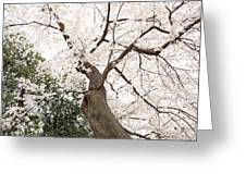 Cherry Blossoms - Washington Dc - 0113136 Greeting Card by DC Photographer