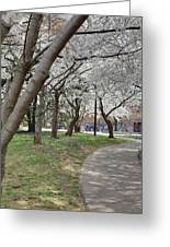 Cherry Blossoms - Washington Dc - 011360 Greeting Card by DC Photographer