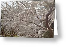 Cherry Blossoms - Washington Dc - 011363 Greeting Card by DC Photographer
