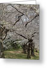 Cherry Blossoms - Washington Dc - 011374 Greeting Card by DC Photographer