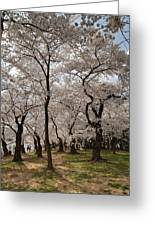 Cherry Blossoms - Washington Dc - 011378 Greeting Card by DC Photographer