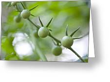 Cherry Tomatoes Greeting Card by Kay Pickens