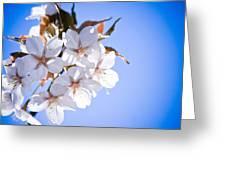 Cherry Tree Blossoms Close Up Greeting Card by Raimond Klavins