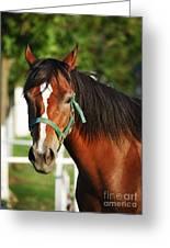 Chestnut Horse Greeting Card by Jelena Jovanovic