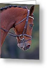 Chestnut Greeting Card by Skip Willits