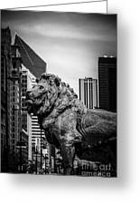 Chicago Lion Statues In Black And White Greeting Card by Paul Velgos