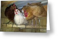 Chick Trio Greeting Card by Donna Brown