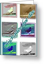 Chickadee Greeting Card by Becky Sterling