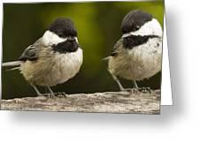 Chickadee Dee Dee Greeting Card by Jean Noren