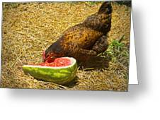 Chicken And Her Watermelon Greeting Card by Sandi OReilly