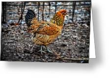 Chicken Greeting Card by Mary Machare