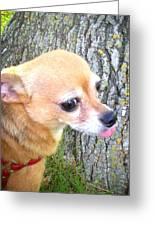 Chihuahua Greeting Card by Lisa Piper Menkin Stegeman