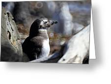 Chilean Penguin Greeting Card by Arie Arik Chen