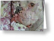 China Dog Greeting Card by Judy Wood