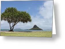Chinamans Hat With Tree - Oahu Hawaii Greeting Card by Brian Harig