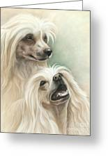 Chinese Crested Greeting Card by Tobiasz Stefaniak