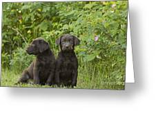 Chocolate Labrador Retriever Puppies Greeting Card by Linda Freshwaters Arndt