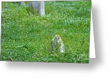 Christ Church Graveyard Greeting Card by Kay Pickens