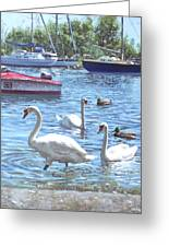 Christchurch Harbour Swans And Boats Greeting Card by Martin Davey