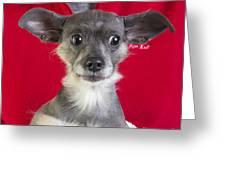Christmas Dog Greeting Card by Edward Fielding